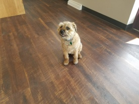 Cooper testing out the new flooring